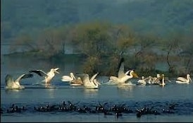 Bharatpur – Keoladeo National Park - Ranthambore National Park