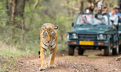 Ranthambore National Park - Bundi